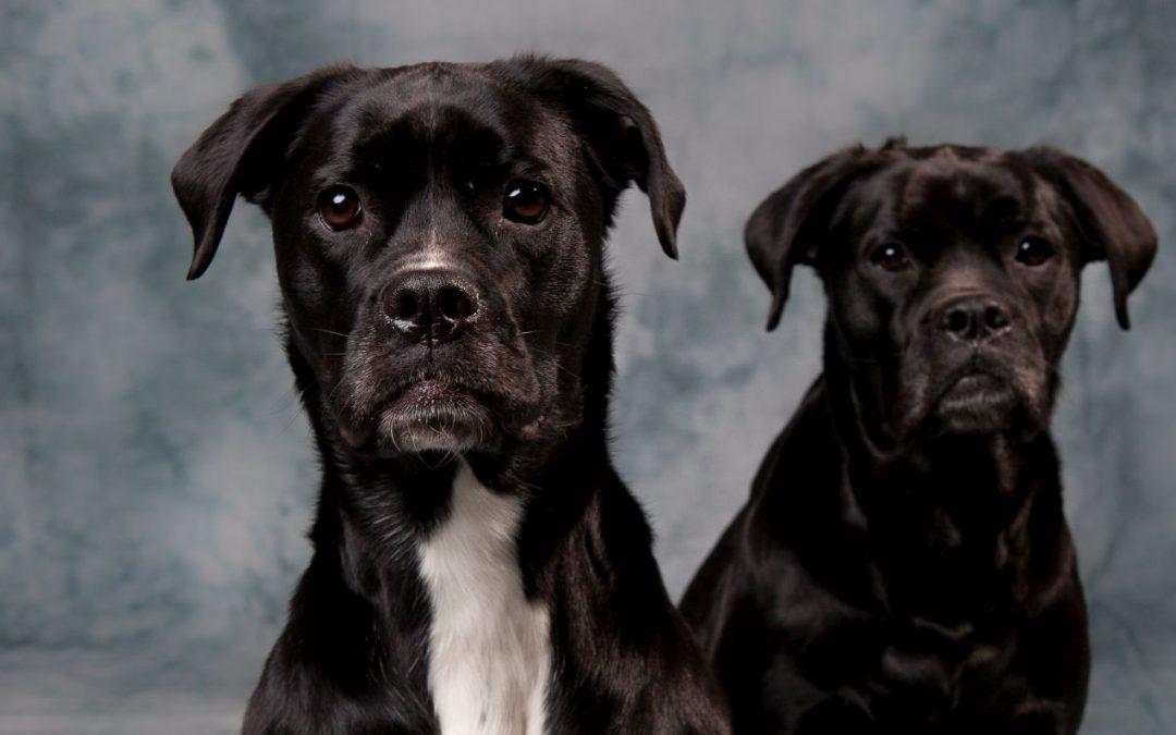 D.D.D. Double Dutch Dogs