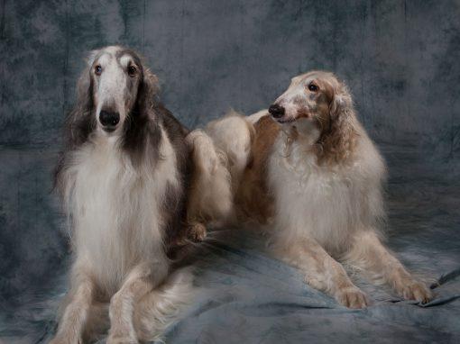 Double Dutch Dogs