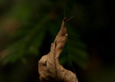 Natuur 3